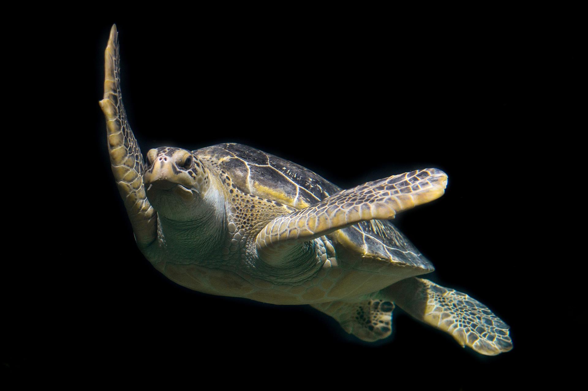 ISLAND HEIGHTS: Turtle Trouble
