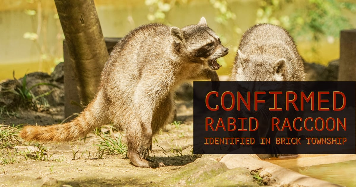 Brick: Confirmed – Rabid Racoon Identified After Incident With Dog.