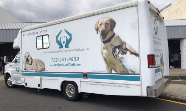 Volunteer Auxiliary for Animals: Adopt Don't Shop