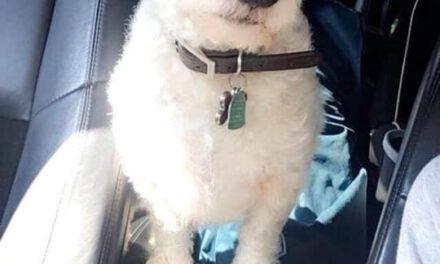 Lost Dog In Barnegat NJ