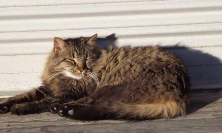 LACEY: Struck Cat
