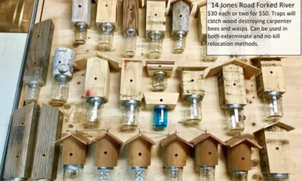 LACEY: Carpenter Bee Traps For Sale