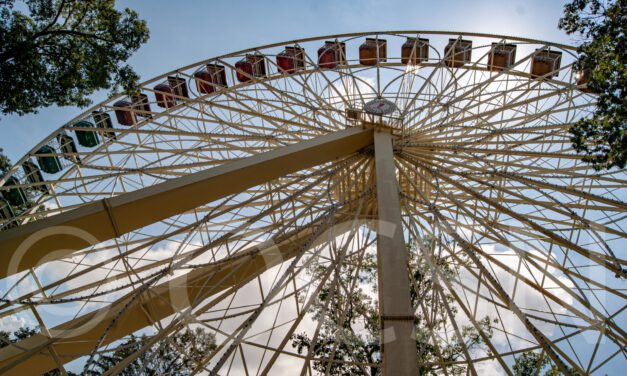 Doctor Sues Six Flags For Whip Lash