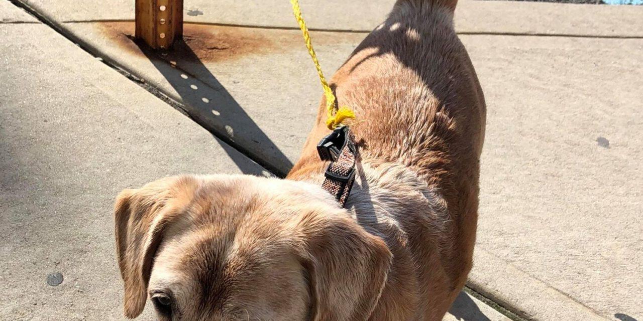 LACEY: Dog Bite
