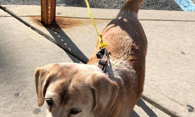 LACEY: Dog vs. Pool