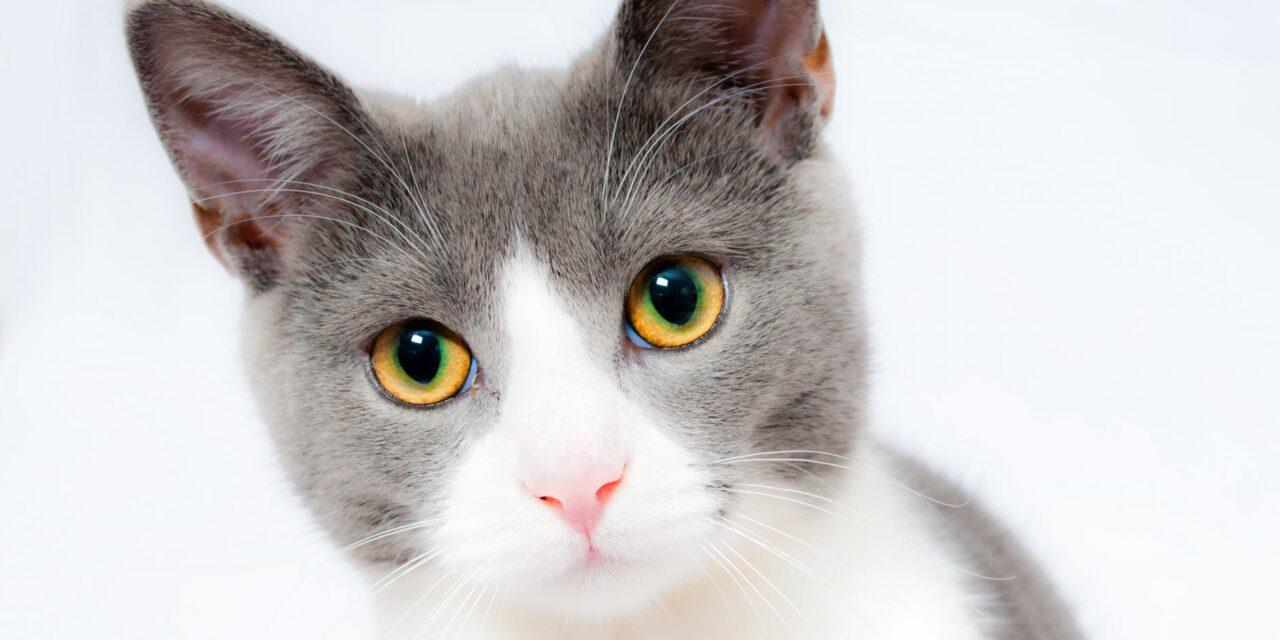 SSH: Attack Cat!