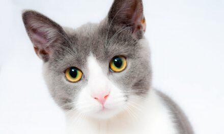 WARETOWN: Cat Stuck