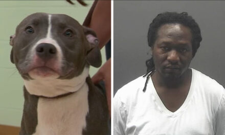 Man who left dog to drown found guilty by jury at trial