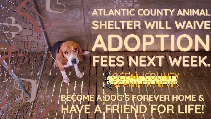 Atlantic County: Animal Shelter to Waive Adtoption Fees Next Week