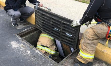 TOMS RIVER: Cats Rescued from Drain