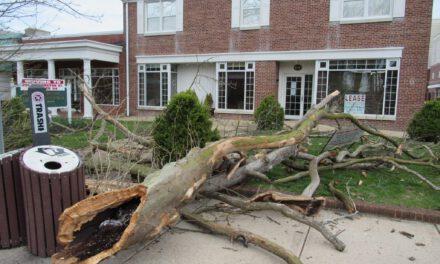 Toms River: Trees Down On Washington Street