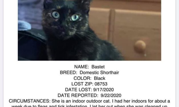 TOMS RIVER: Help Find Lost Cat